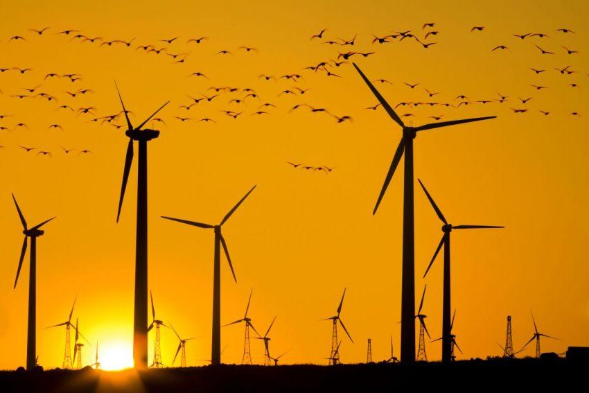 Les éoliennes ne sont pas une menace pour les oiseaux