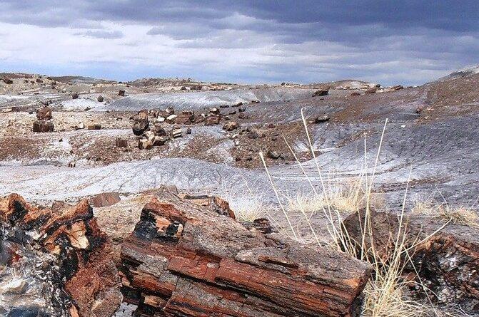Désert Libyque: découverte de fossiles et histoire de l'évolution